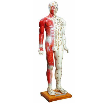 modelo-anatomico-de-acupuntura-anatomic-85cm-masculino.centermedical.com.br