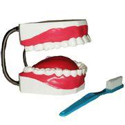arcada-dentaria-com-lingua-e-escova-anatomic.centermedical.com.br