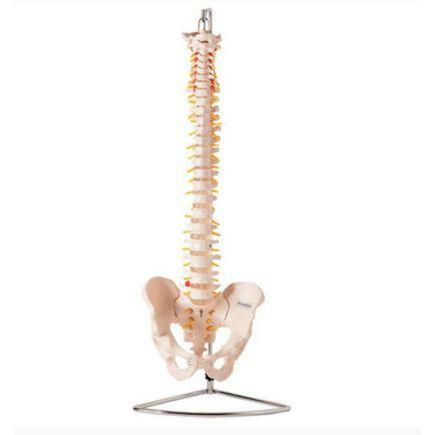 coluna-vertebral-flexivel-anatomic.centermedical.com.br