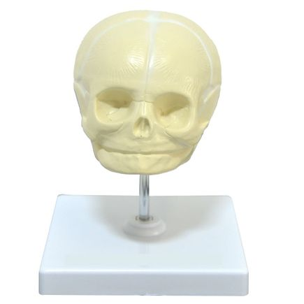 modelo-cranio-fetal-anatomic.centermedical.com.br