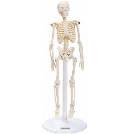 modelo-esqueleto-anatomic-20cm.centermedical.com.br