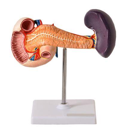 modelo-de-pancreas-anatomic.centermedical.com.br