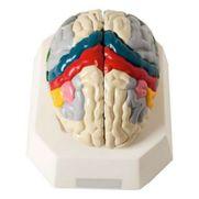 cerebro-c-regiao-funcional-do-cortex.centermedical.com.br
