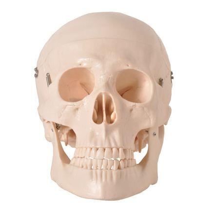 cranio-com-05-partes-anatomic.centermedical.com.br