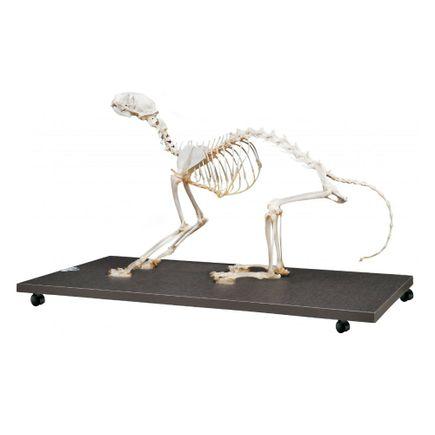 esqueleto-de-gato-articulado-em-tamanho-natural.centermedical.com.br