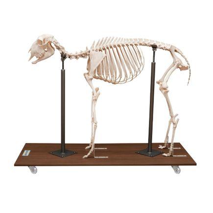 esqueleto-de-ovelha-articulado-em-tamanho-natural.centermedical.com.br