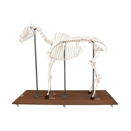 esqueleto-de-cavalo-articulado-em-tamanho-natural.centermedical.com.br