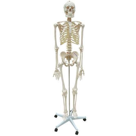 esqueleto-flexivel-com-suporte-anatomic-168cm.centermedial.com.br