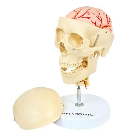 cranio-com-coluna-cervical-cerebro-13-partes.centermedical.com.br