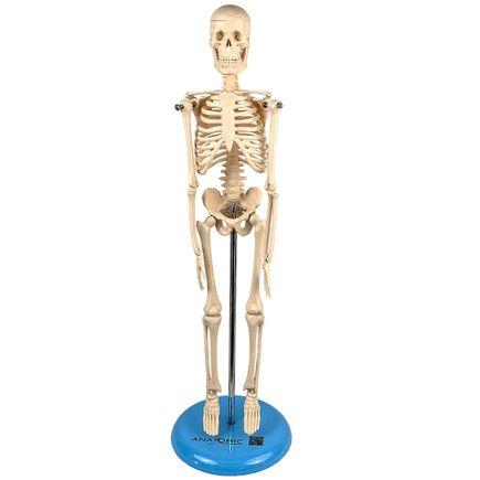 modelo-de-esqueleto-45cm.centermedical.com.br