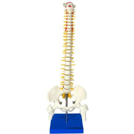 coluna-vertebral-50cm.centermedical.com.br