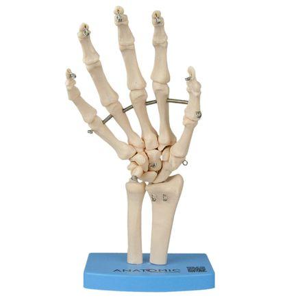 esqueleto-da-mao-ossos-do-punho.centermedical.com.br