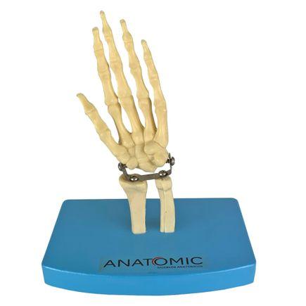 mini-esqueleto-da-mao.centermedical.com.br