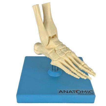 mini-esqueleto-do-pe.centermedical.com.br
