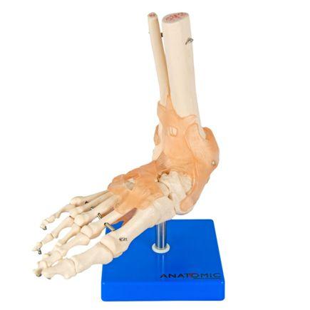 articulacao-do-pe-com-ligamentos.centermedical.com.br