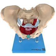esqueleto-pelvico-com-utero-em-2-partes.centermedical.com.br