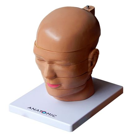cabeca-em-disco-corte-axial-em-5-partes.centermedical.com.br