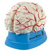 cerebro-com-arterias-em-8-partes.centermedical.com.br