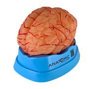 cerebro-com-arterias-em-09-partes-anatomic.centermedical.com.br