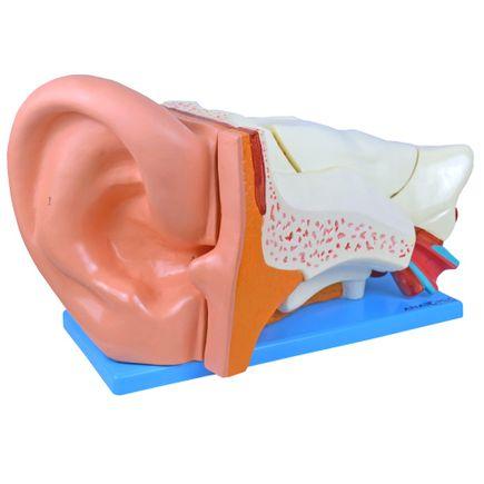 ouvido-ampliado-com-6-partes.centermedical.com.br