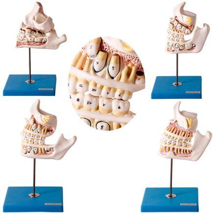 modelo-desenvolvimento-da-denticao.centermedical.com.br