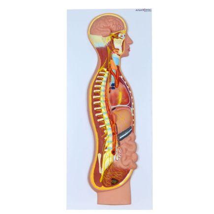 sistema-nervoso-simpatico-em-placa.centermedical.com.br