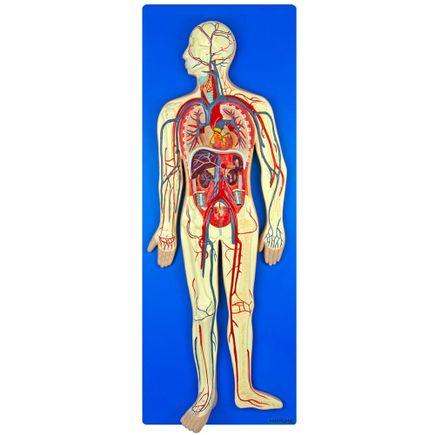 sistema-circulatorio-em-placa.centermedical.com.br