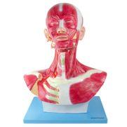 cabeca-e-pescoco-muscular.centermedical.com.br