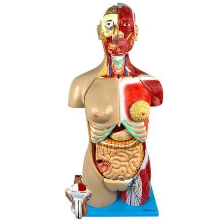 torso-muscular-bissexual-de-85-cm-e-30-partes.centermedical.com.br