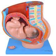 pelve-de-gravidez-em-4-partes.centermedical.com.br