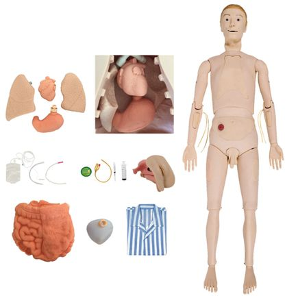 manequim-bissexual-com-orgaos-internos-simulador-para-treino-de-enfermagem.centermedical.com.br