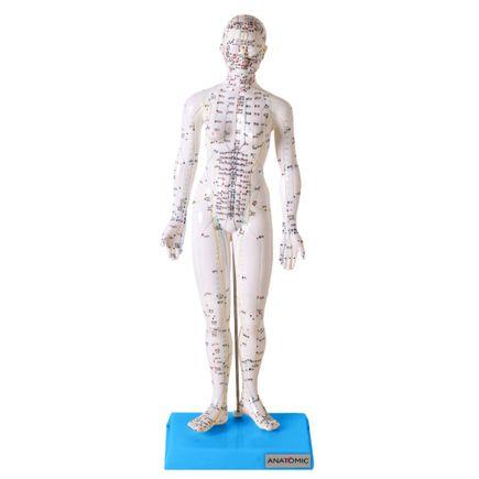modelo-de-acupuntura-de-50-cm-feminino.centermedical.com.br