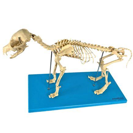 esqueleto-de-cachorro-em-resina.centermedical.com.br