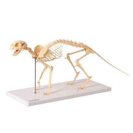 esqueleto-de-gato-em-resina.centermedical.com.br