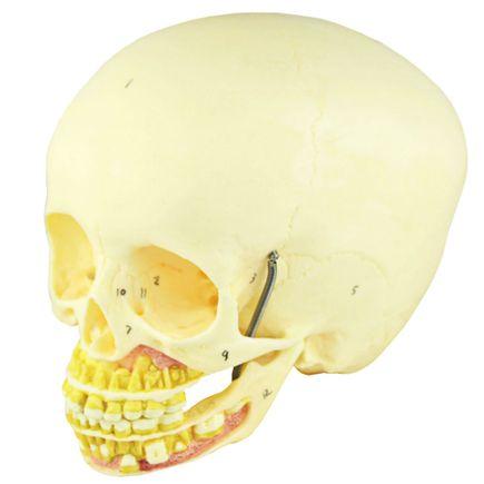 cranio-infatil-com-mandibula-aberta.centermedical.com.br