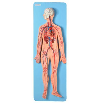 sistema-circulatorio-luxo.centermedical.com.br