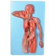 sistema-linfatico-em-placa.centermedical.com.br