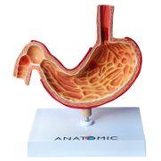 estomago-com-patologias.centermedical.com.br