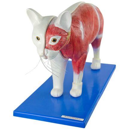 anatomia-do-gato.centermedical.com.br