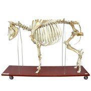 esqueleto-da-vaca-em-tamanho-natural.centermedical.com.br