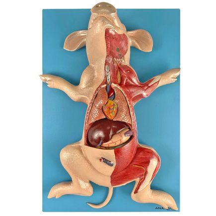 anatomia-do-porco-em-placa.centermedical.com.br